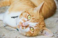 Cat portrait close up Stock Photo