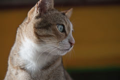 Cat portrait close up, Cute kitten . Royalty Free Stock Photos