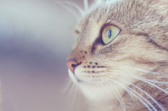 Cat portrait close up Royalty Free Stock Photo