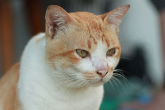 Cat portrait. Close up shot of cat Royalty Free Stock Images