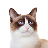 Cat portrait closeup Royalty Free Stock Photography