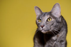 Cat portrait Stock Photography
