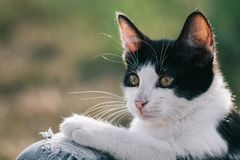 Cat portrait at garden Royalty Free Stock Photography