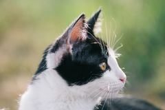 Cat portrait at garden Royalty Free Stock Image