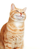 Cat portrait. Royalty Free Stock Photography