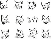 Cat, portrait, graphic image, black. Portraits of cats in various angles and positions Stock Photo