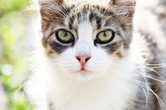 Cat portrait. With gres in background Royalty Free Stock Images