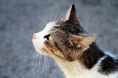 Cat portrait. With gres in background Stock Photography