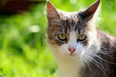 Cat portrait. With gres in background Stock Photos
