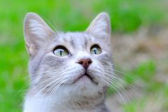 Cat. Grey young cat in garden royalty free stock photos