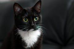 Black cat portrait at home. Cat portrait at home close up stock image
