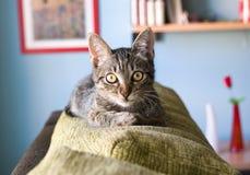 Cat portrait indoors Stock Image