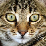 Cat portrait macro shot Royalty Free Stock Photos