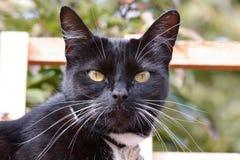 Cat Portrait noire et blanche Photographie stock