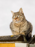 Cat portrait outdoors. And with light flash Stock Photography