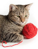 Cat portrait with red clew. Over white Royalty Free Stock Photo