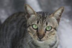 Cat portrait on roof Stock Photos