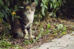 Cat. Portrait of sitting beautiful cat Stock Images