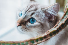 Cat. Portrait of sitting beautiful cat Royalty Free Stock Images