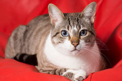 Cat portrait Royalty Free Stock Photography