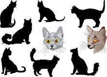 Cat portraits and silhouettes collection Royalty Free Stock Image
