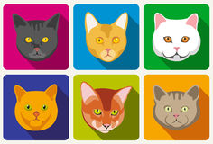 Cat portraits vector collection Stock Photos