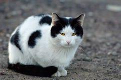 Cat portreit Royalty Free Stock Photos