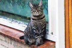CAT posant pour l'appareil-photo image libre de droits