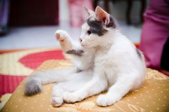 Cat Pose Stock Images