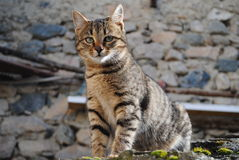 Cat pose. Beautiful domestic pet feral cat pose Stock Photo
