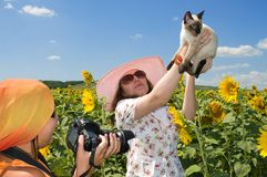 The cat poses for the photographer. Stock Images