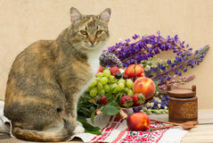 Cat Posing Stockbilder