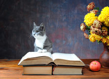 Cat posing for on books and flowers Stock Images