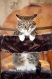 Cat posing for camera. Stock Image
