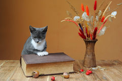 Cat posing next to books and flowers Stock Photos