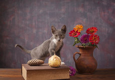 Cat posing next to flowers in a vase Royalty Free Stock Image