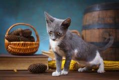 Cat posing for in the studio Stock Photo