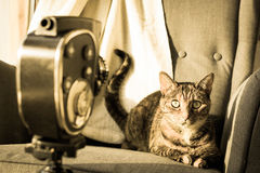 Cat posing to old home movie camera. Stock Photo