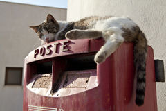 Cat on a Postbox Royalty Free Stock Images