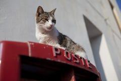 Cat on a Postbox Stock Photos