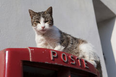Cat on a Postbox Stock Photography