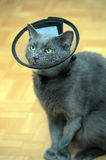 Cat in the postoperative collar Royalty Free Stock Photography