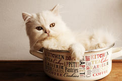 Cat in a pot Royalty Free Stock Photography