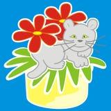 Cat in pot Stock Photos