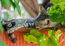 Cat in pot Stock Images