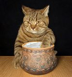 Cat with a pot of sour cream Royalty Free Stock Images