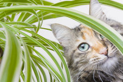 Cat and Potplant Stock Photo