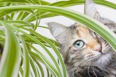 Cat and Potplant Stock Photo