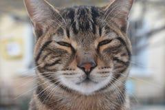 Cat Potrait. Istanbul, Turkey Royalty Free Stock Photo
