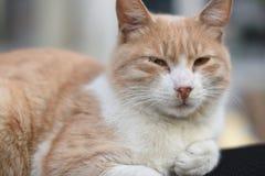 Cat Potrait. Istanbul, Turkey Royalty Free Stock Photos